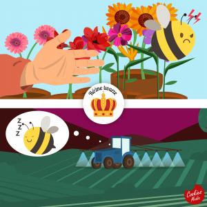ochrona pszczół